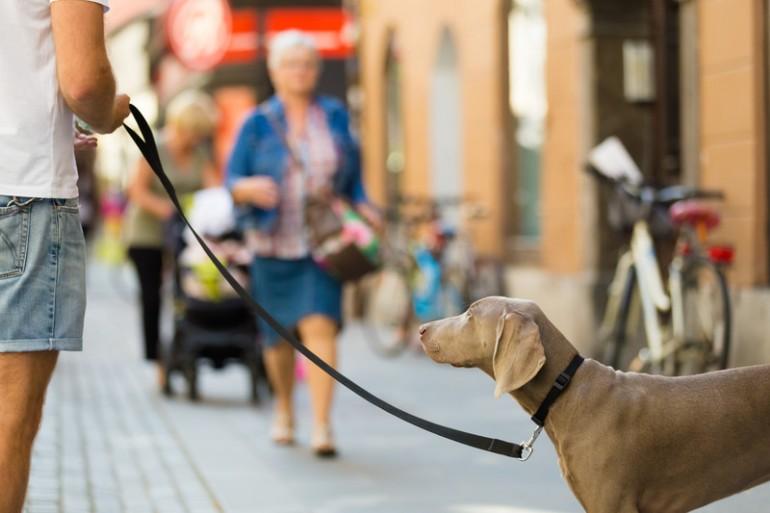Ligar-paseando-al-perro